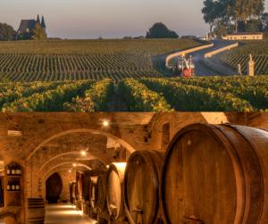 Estate, vineyard and cellar